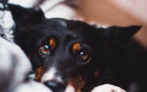 成精了!狗狗被主人指责偷吃东西后诬陷好友