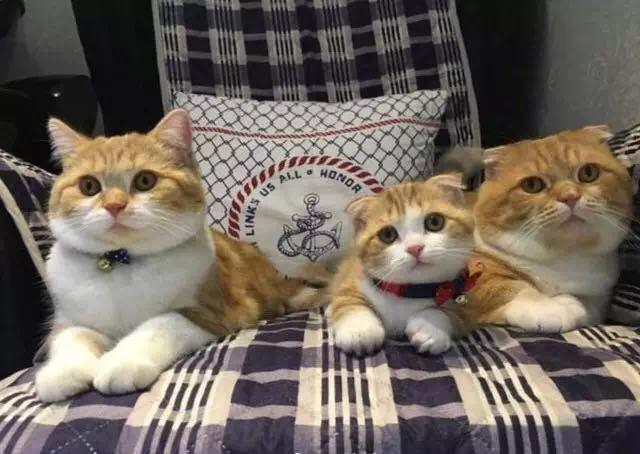 喵星夫妇有了小喵星人 三个包子脸萌的你都不敢看
