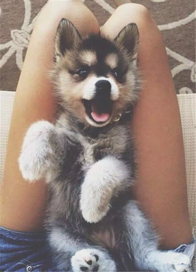 狗狗抱着抱着就长大了 你还记得它们小时候的样子吗