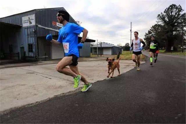 本来想让狗狗去撒泡尿,没想到它居然跑了个马拉松,还扛了块奖牌回来