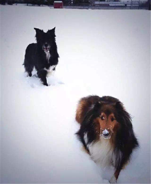 都说了狗才是亲生的 你非要厚着脸皮说不信