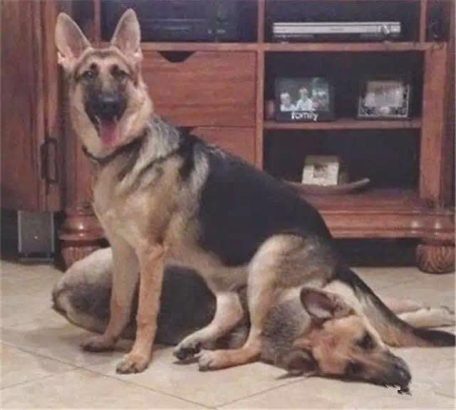 冬天天冷听说有钱的狗都有一个自动恒温的猫垫子