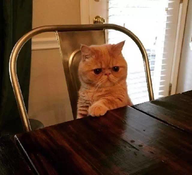 这只猫一言不合就站起来威胁铲屎官