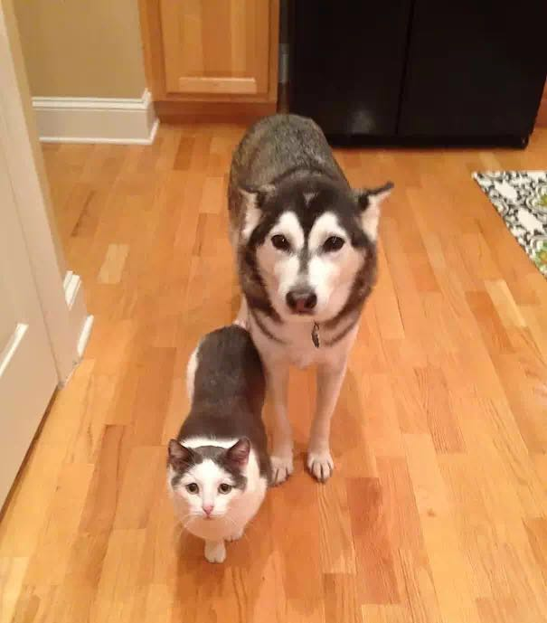 长相相似度高达99%,但是他们都不是一个妈生的!