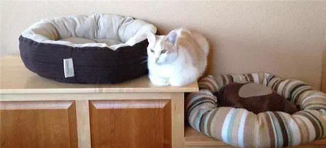 这些猫的思维逻辑 人根本理解不了