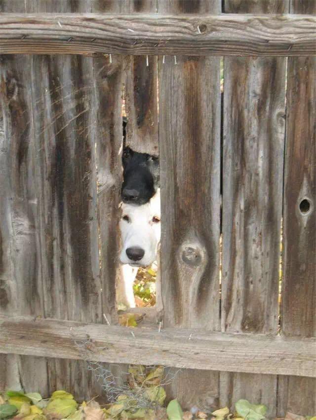 我家狗想出去玩,看见等狗的样子差点笑喷