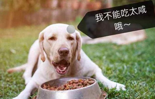 拉布拉多被评为最受欢迎的狗狗