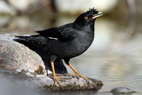 ⎛⎝0.0⎠⎞好养的宠物鸟有哪些⎛⎝0.0⎠⎞
