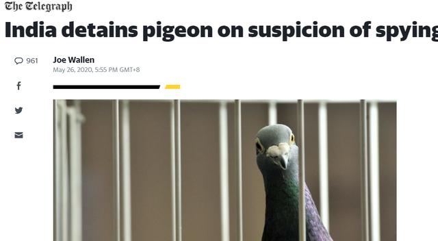 巴基斯坦一只鸽子在印面临牢狱之灾?美:印度人做法令人难以置信