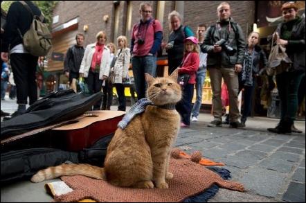 《流浪猫鲍勃》原型猫去世,主人悼念:我生命中的光已经熄灭