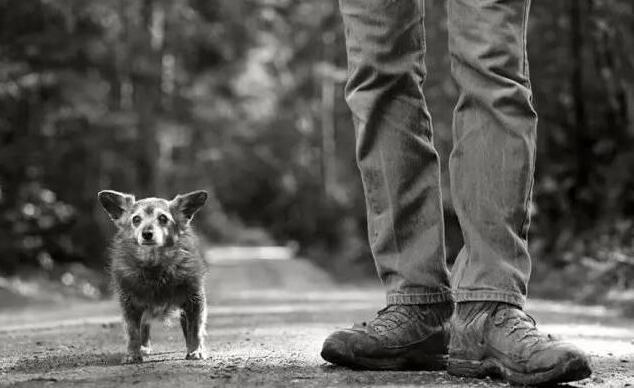 狗狗离世前,主人应该做好这几点,让它不留遗憾