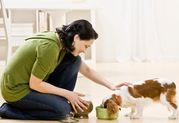 宠物经济逐渐兴起,背后是千亿级的消费市场