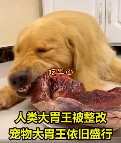 让狗当大胃王吃播,宠物博主,强行塞朝天椒、挑战生鸡腿引众怒