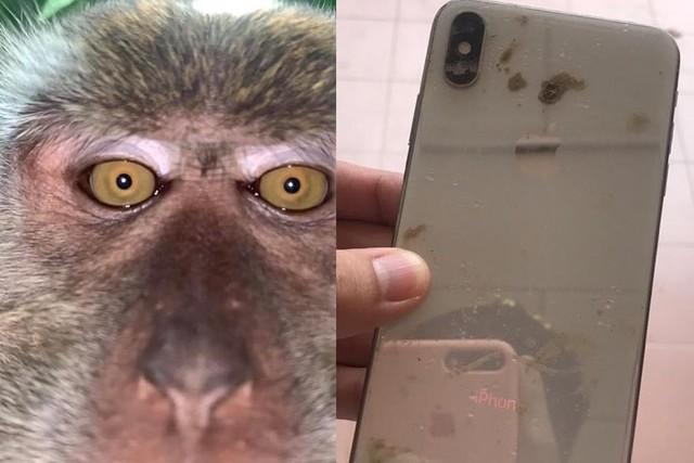 猴子偷手机后疯狂自拍 失主找回后一看惊呆了