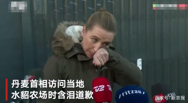 丹麦首相为扑杀水貂而含泪道歉,该国已捕杀880万只水貂,为何下此狠手?