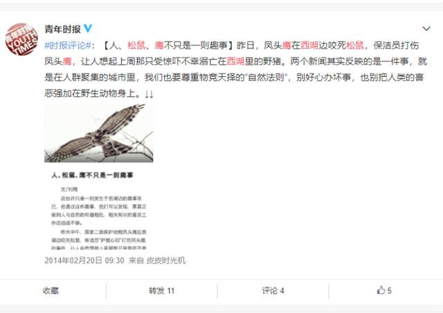西湖网红松鼠被鹰抓走 喂食的市民:肥的跑不动