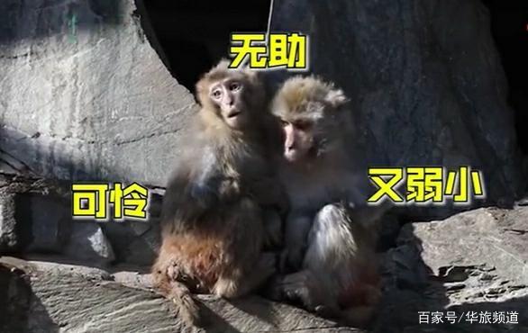 北京动物园猴子扎堆抱团取暖,猴子们互相依偎情意浓浓