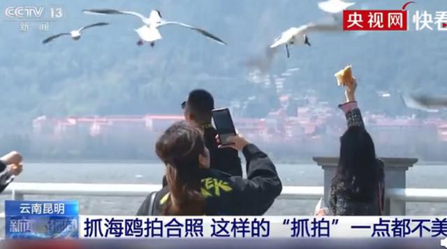 """央视曝光不文明游客抓海鸥拍照,又见""""辣手摧鸥""""!这样的""""抓拍""""不文明也不美"""