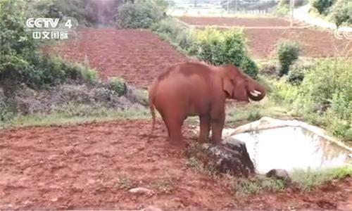 独自出走的小象已单独生活了10天,专家说独象归队意图不明显