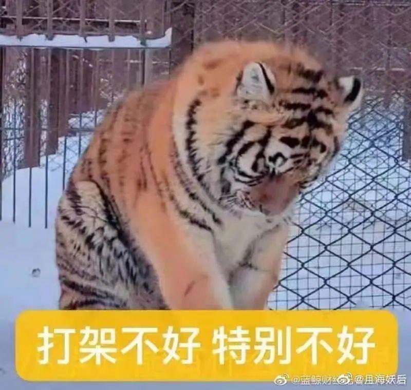 游客在动物园打架,导致动物纷纷围观效仿互殴,场面一度失控!
