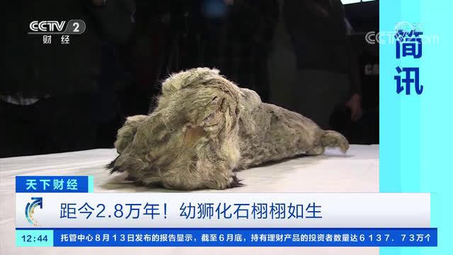 西伯利亚发现4万年前幼狮化石,另一只冰冻2.8万年幼狮仍栩栩如生