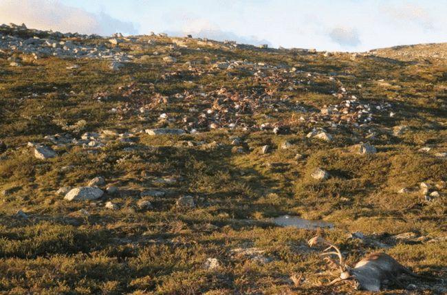 格鲁吉亚550只羊吃草时被雷瞬间劈死,遗体遍布山坡