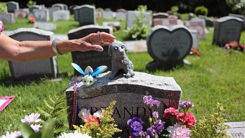 """宠物殡葬行业中宠物的""""后事""""不应被忽视的重要知识点"""